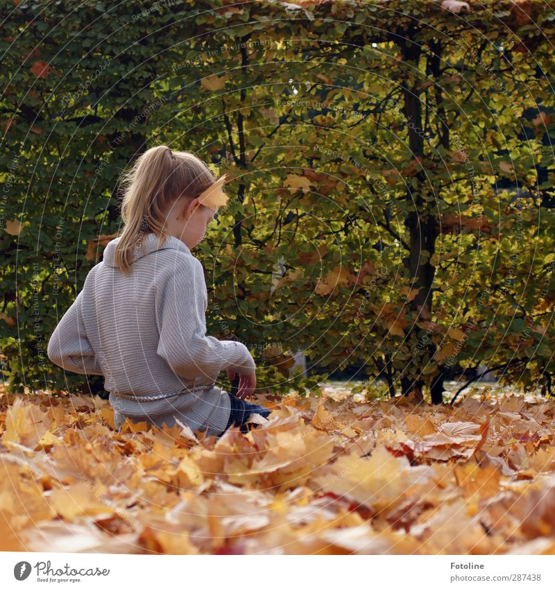 Human being Child Nature Beautiful Hand Plant Girl Leaf Face Environment Autumn Feminine Hair and hairstyles Head Bright Natural