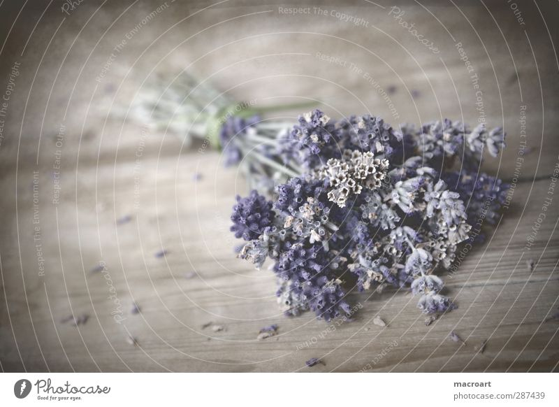 lavender Lavender floats Table Flower Blossom Bouquet Violet Fragrance Odor Wooden table Wooden board Blossoming Comforting Medicinal plant Medication