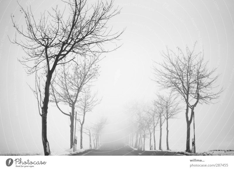 fog journey into the unknown Landscape Winter Fog Snow tree Street Country road Avenue chill Gloomy Gray Black White Bleak Infinity Uncertain future Ambiguous