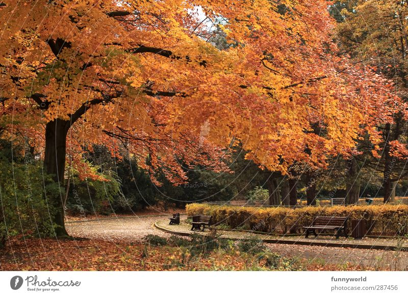 Old Plant Tree Red Leaf Loneliness Calm Relaxation Yellow Autumn Senior citizen Moody Park Going Orange Gold