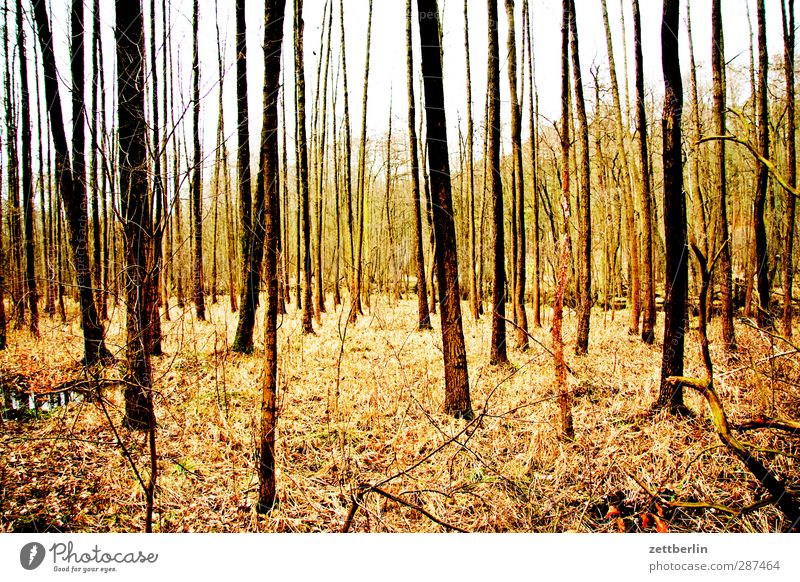 Forest again Environment Nature Landscape Autumn Climate Climate change Weather Beautiful weather Plant Tree Good Deciduous forest Mixed forest Autumn leaves