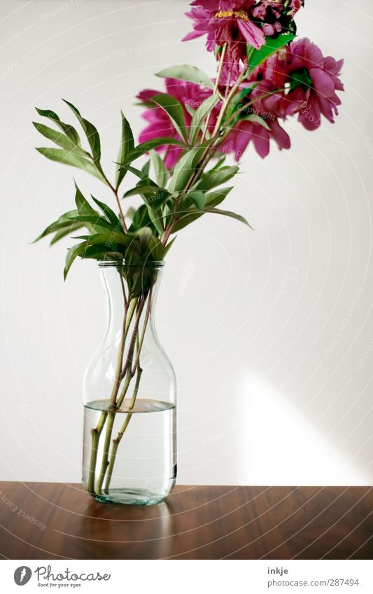 Water Green Beautiful Red Flower Wood Brown Natural Pink Glass Fresh Decoration Table Esthetic Simple Clarity
