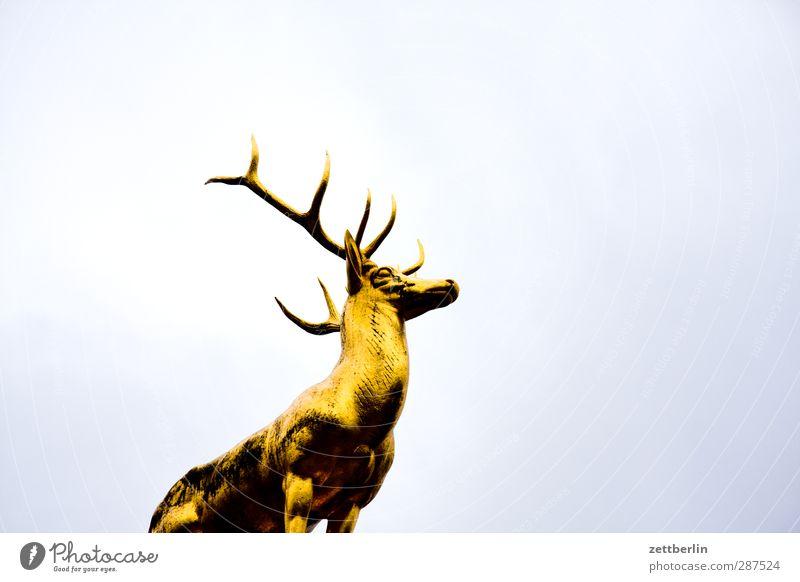 Nature Heaven Animal Environment Berlin Garden Park Leisure and hobbies Gold Landmark Monument Tourist Attraction Hunting Zoo Pride Deer