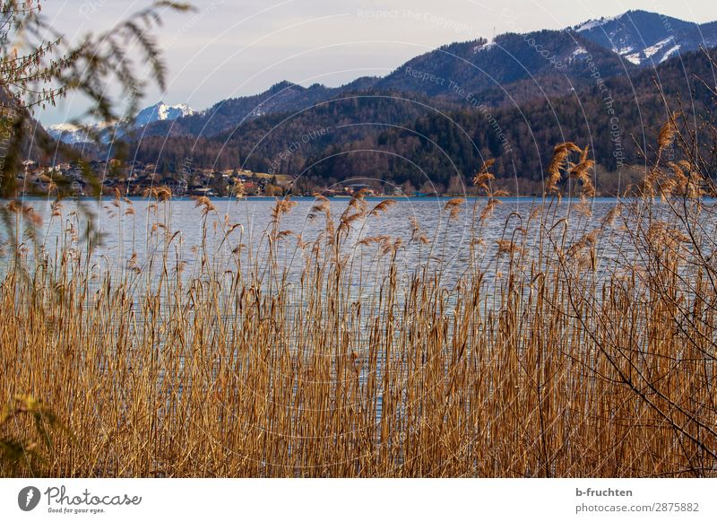 Mountain lake, reed, mountains Tourism Trip Hiking Spring Autumn Plant Forest Hill Alps Lakeside Loneliness Vacation & Travel Belief Religion and faith Idyll