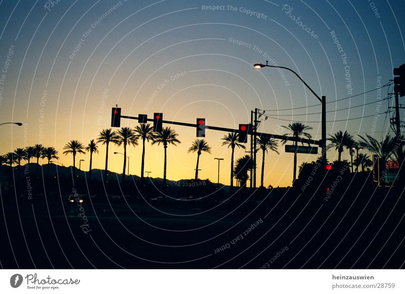 Las Vegas Boulevard Traffic light Sunset Street Sky Cloudless sky Beautiful weather Clear sky Silhouette Palm tree Avenue Row of trees Neutral Background