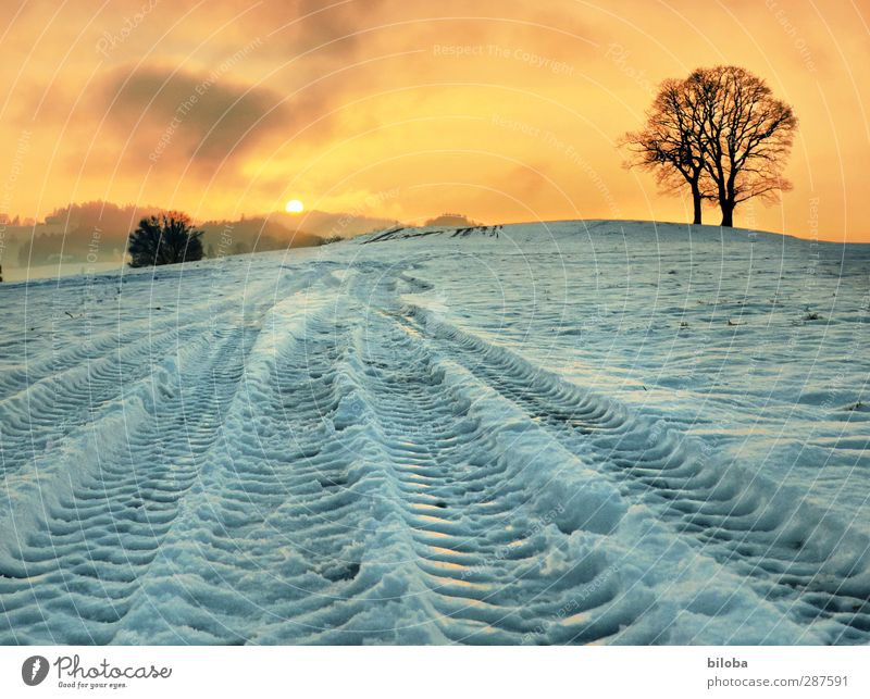 Tracks in the snow Landscape Plant Sunrise Sunset Winter Snow Tree Field Emotions Moody Happy Hope Snowfall Tractor track Colour photo Exterior shot Evening