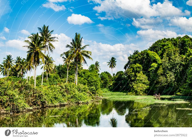idyllic Vacation & Travel Tourism Trip Adventure Far-off places Freedom Environment Nature Landscape Sky Clouds Plant Tree Bushes Leaf Virgin forest River bank
