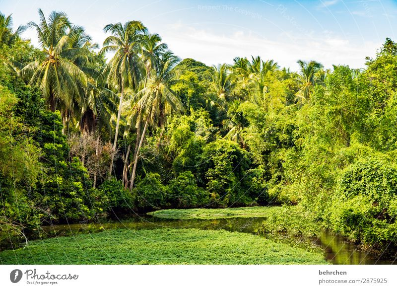 greenest Idyll Exotic Gorgeous palms Trip Water Day Light Virgin forest Contrast River Tourism River bank reflection Sunlight Paradise Fantastic Exceptional