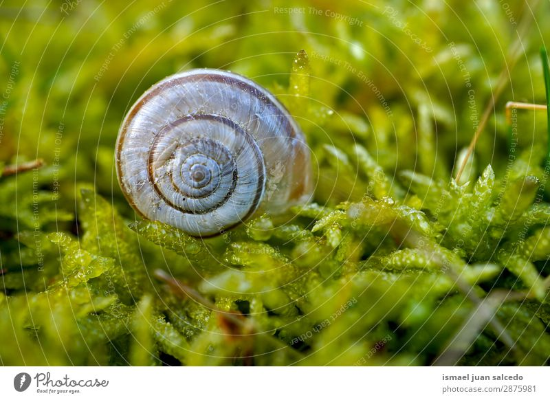 white snail on the ground Snail Animal Bug White Insect Small Shell Spiral Nature Plant Garden Exterior shot Fragile Cute Beauty Photography Loneliness