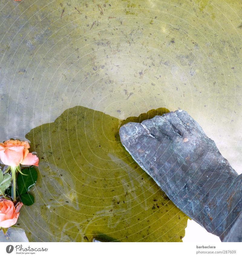 That's got a hand and a foot in it. Feet Work of art Sculpture Water Sunlight Flower Rose Pond Stone Lie Stand Bright Wet Gray Pink Emotions Romance Esthetic