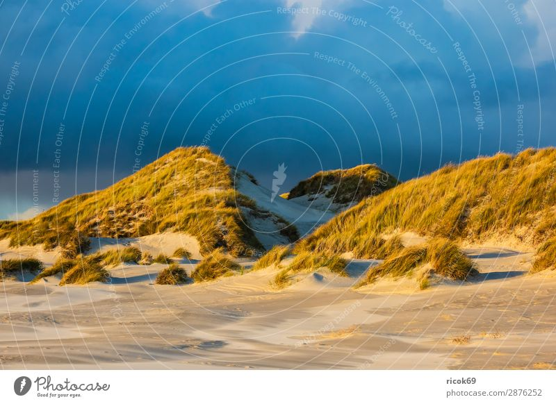 Landscape in the dunes on the island of Amrum Relaxation Vacation & Travel Tourism Beach Ocean Island Nature Sand Clouds Autumn Coast North Sea Blue Yellow