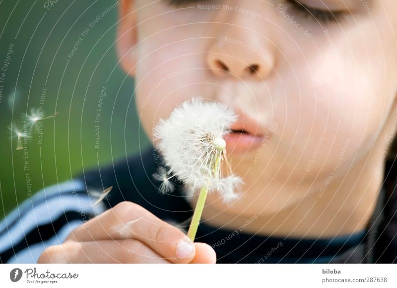 This has hand and foot Child Infancy Face 1 Human being 3 - 8 years Green Black White Joy Blow Dandelion Hand Mouth Colour photo Day Blur Shallow depth of field