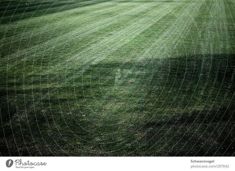grass is green Environment Nature Landscape Plant Grass Foliage plant Meadow Green Stagnating Shadow play Sports Training Field Mow the lawn Tracks Symmetry