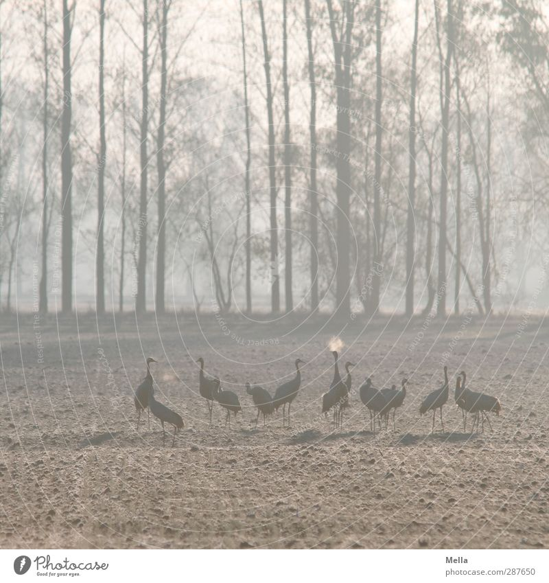 The breath Environment Nature Landscape Animal Autumn Winter Tree Meadow Field Bird Crane Group of animals Breathe Stand Together Cold Natural Blue Colour photo