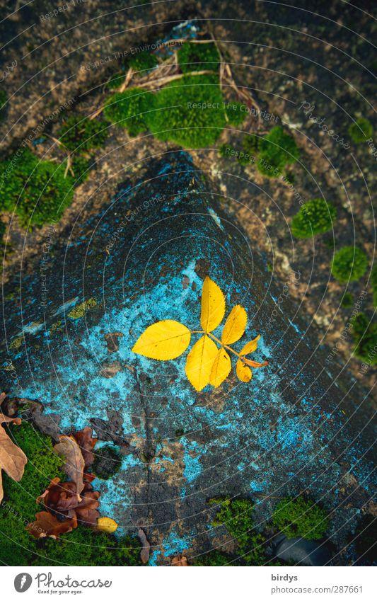 Old Leaf Loneliness Yellow Autumn Senior citizen Sadness Garden Time Authentic Illuminate Corner Change Transience Decline Turquoise
