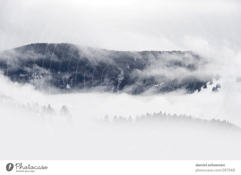Nature White Clouds Winter Landscape Forest Environment Mountain Cold Snow Snowfall Ice Weather Wind Climate Fog