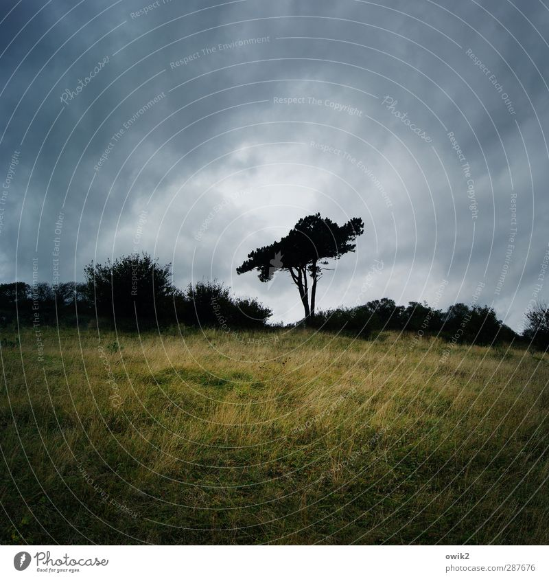 Sky Nature Plant Tree Loneliness Clouds Calm Landscape Environment Dark Grass Sadness Horizon Germany Weather Climate