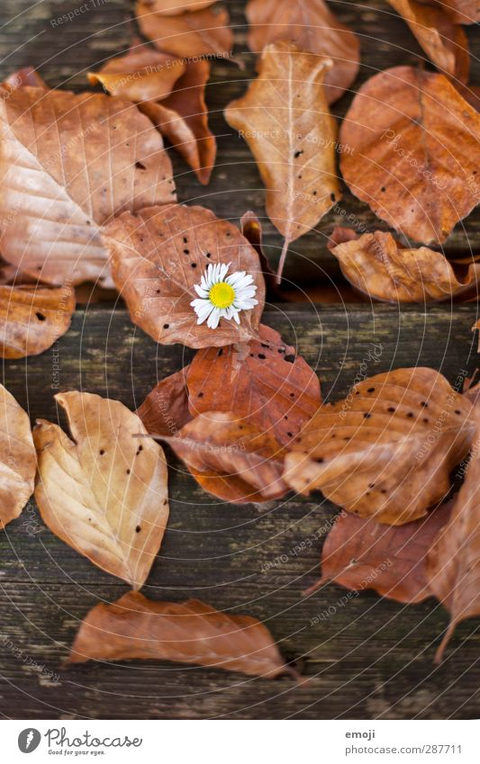conspicuous Environment Nature Plant Autumn Flower Leaf Natural Brown Daisy Wood Colour photo Exterior shot Detail Deserted Day