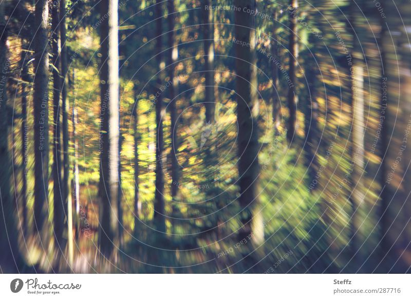 Forest impression with motion blur Automn wood Impression Forest trees differently Spirited blurred Swing Edge of the forest Woodground Autumn feeling Brown