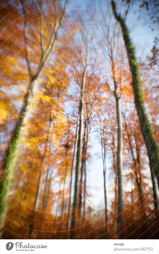 Sky Nature Plant Tree Forest Environment Autumn Natural Beautiful weather Distorted