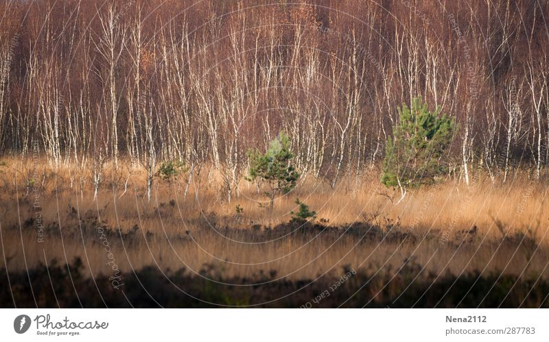 Autumn to the Venn Environment Nature Landscape Plant Earth Beautiful weather Tree Grass Bushes Wild plant Meadow Forest Brown Green Nature reserve Bog
