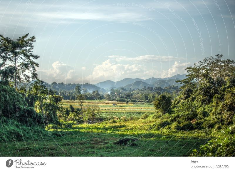 landscape Environment Nature Landscape Plant Sky Clouds Summer Beautiful weather Warmth Tree Grass Virgin forest Hill Thailand HDR Chiang Rai Colour photo