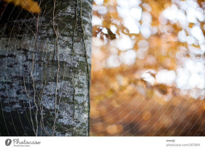 Nature Plant Tree Forest Yellow Environment Autumn Natural Tree trunk