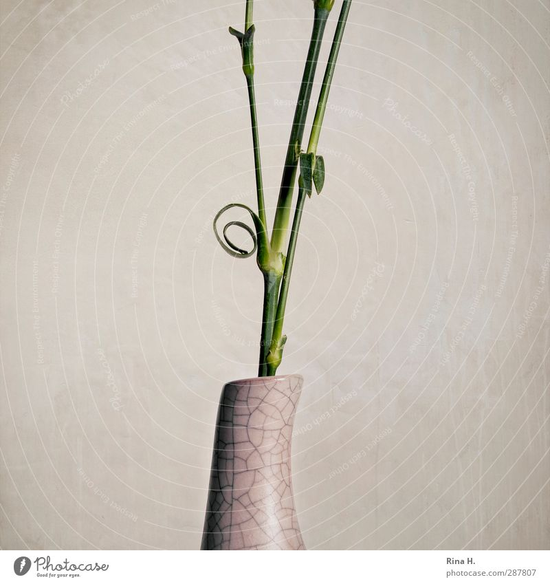 whorls Flower flower stems Vase Bright Spiral Average Cut Stalk Subdued colour Studio shot Deserted Copy Space left Copy Space right