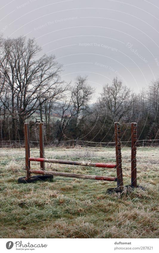 Nature Landscape Meadow Sports Jump Field Fog Bad weather Equestrian sports Ride