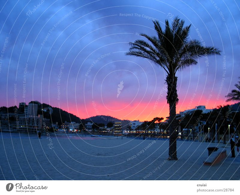 malle sky Spain Majorca Beach Palm tree Palma de Majorca Sandy beach Multicoloured Morning Violet Europe Sun Sky Dusk Dawn