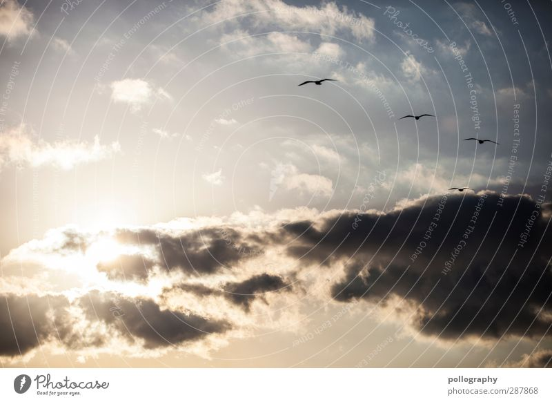 Sky Nature Summer Animal Clouds Relaxation Together Weather Wind Climate Beautiful weather Attachment Seagull Connectedness Flock Sympathy