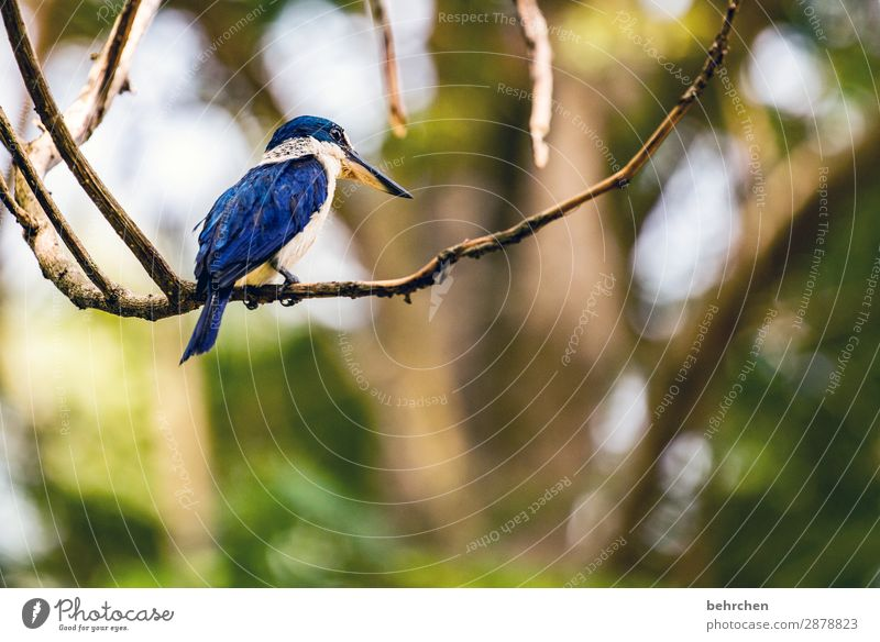 today is bird day... Asia Virgin forest blurriness Contrast Light Day Deserted Colour photo Wanderlust Love of animals Detail Animal portrait Exterior shot Cute