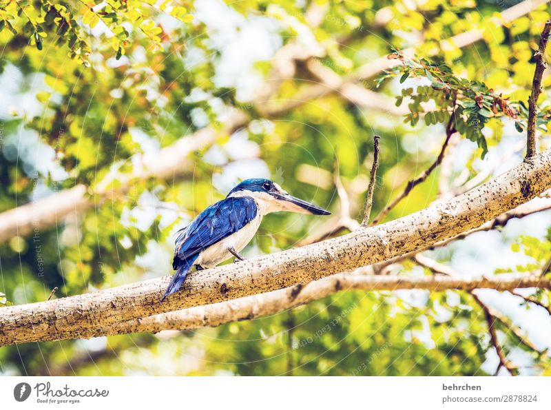 blue king | kingfisher Animal portrait Blur Contrast Light Day Deserted Detail Close-up Exterior shot Colour photo Wanderlust Love of animals