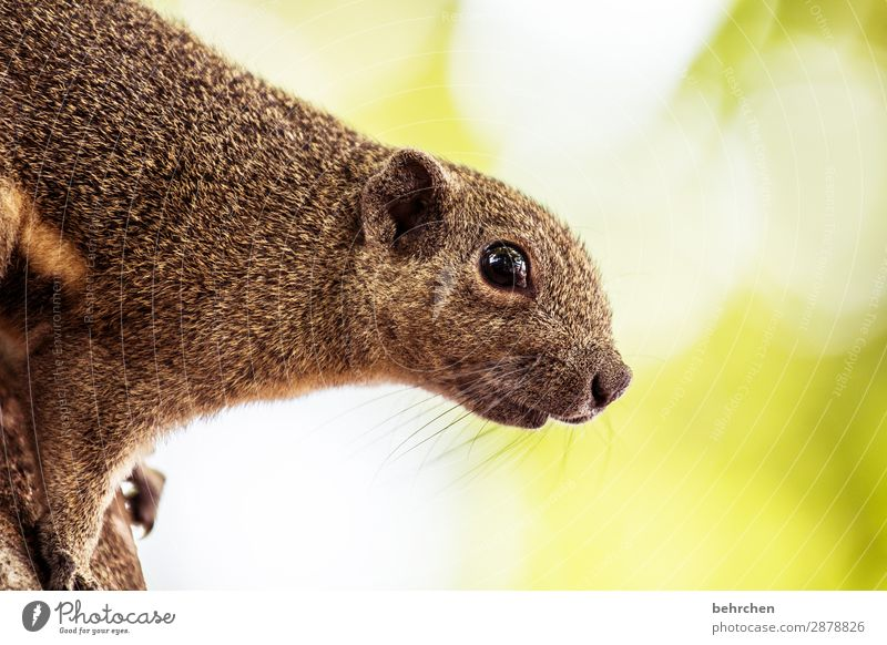 uh, who's the crazy guy next to me?! Squirrel Animal Nature Cute Tree Animal portrait blurriness Sunlight Contrast Light Day Colour photo Exterior shot Close-up