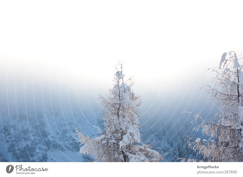 Nature Plant Blue Tree Landscape Calm Winter Mountain Snow Freedom Dream Fog Hiking Idyll Trip Climate