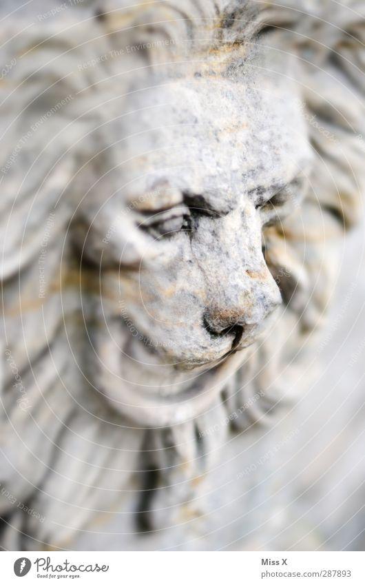 Steinleu Art Sculpture Animal Wild animal 1 Stone Old Historic Gray Transience Nose Lion Lion's mane Statue Black & white photo Subdued colour Deserted