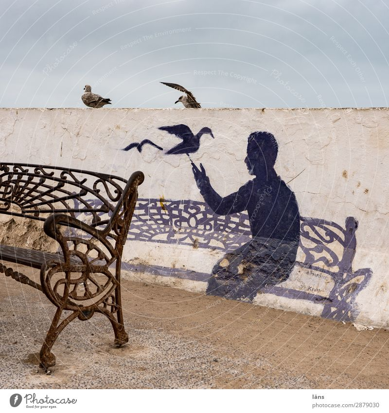 SET YOU Human being 1 Essaouira Wall (barrier) Wall (building) Bird Sit Life Beginning Bench Seagull Morocco Colour photo Exterior shot Structures and shapes