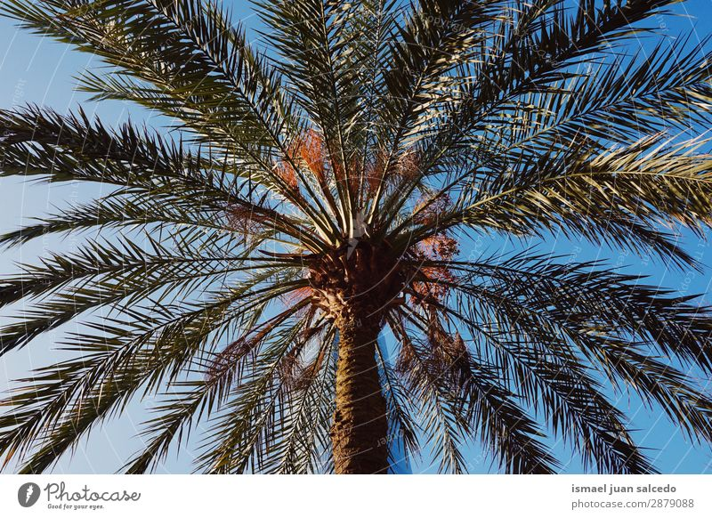 palm tree in the beach Tree Palm tree Branch Plant Leaf Green Garden Floral Nature Tropical Sky Abstract Consistency Neutral Background Spring Summer Autumn