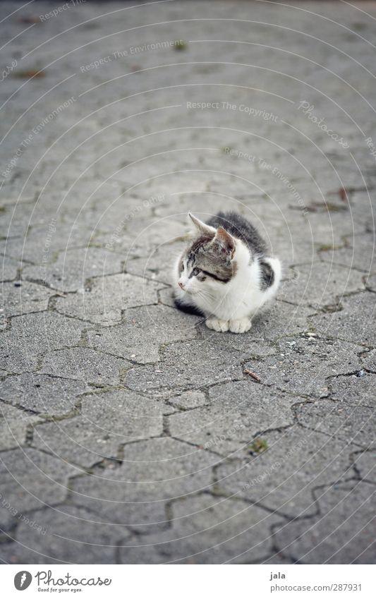 Cat Animal Sit Concrete Pet