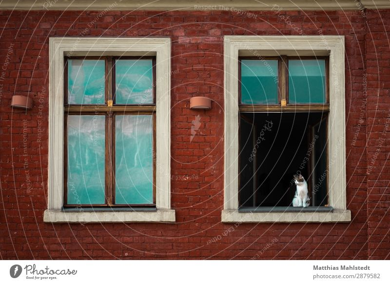 Window with cat Architecture Wall (barrier) Wall (building) Animal Pet Cat 1 Looking Sit Wait Curiosity Above Town Green Red Love of animals Serene Interest