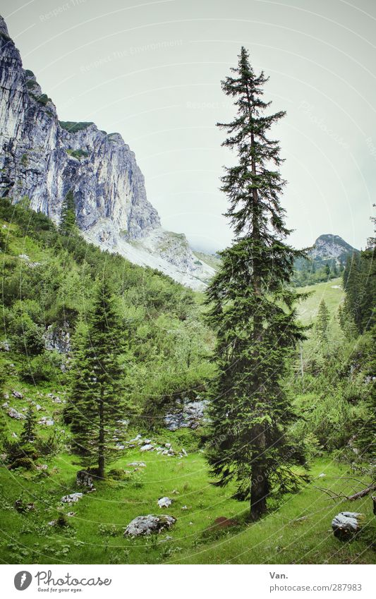 Sky Nature Plant Green Tree Landscape Mountain Grass Rock Bushes Large Tree trunk Alps Spruce