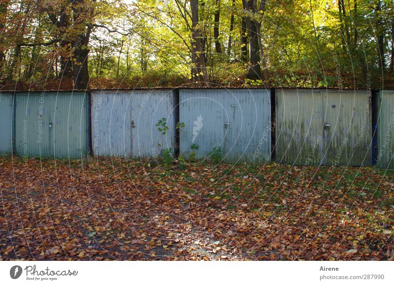 4 doors in the advent calendar Nature Autumn Tree Leaf Autumn leaves Forest Automn wood Deserted Garage Garage door Courtyard Backyard Gate Door Old Blue Brown