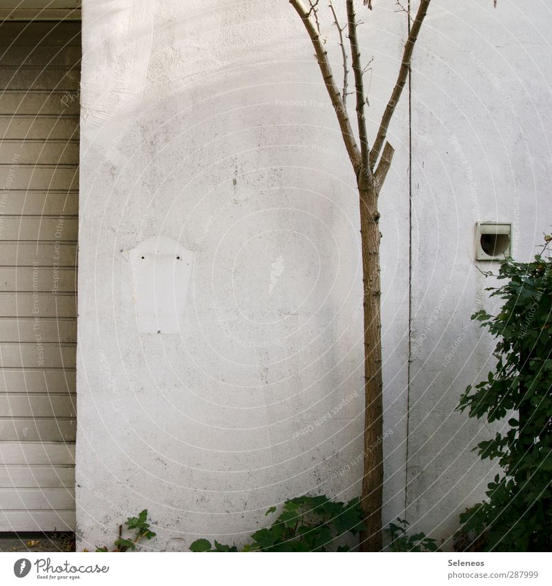 Plant Tree House (Residential Structure) Wall (building) Cold Autumn Wall (barrier) Door Flat (apartment) Facade Living or residing Bushes