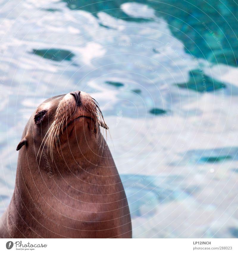 Water Animal Freedom Coast Swimming & Bathing Wild animal Tourism Friendliness Hunting Environmental protection Aquarium Environmental pollution Feeding Survive
