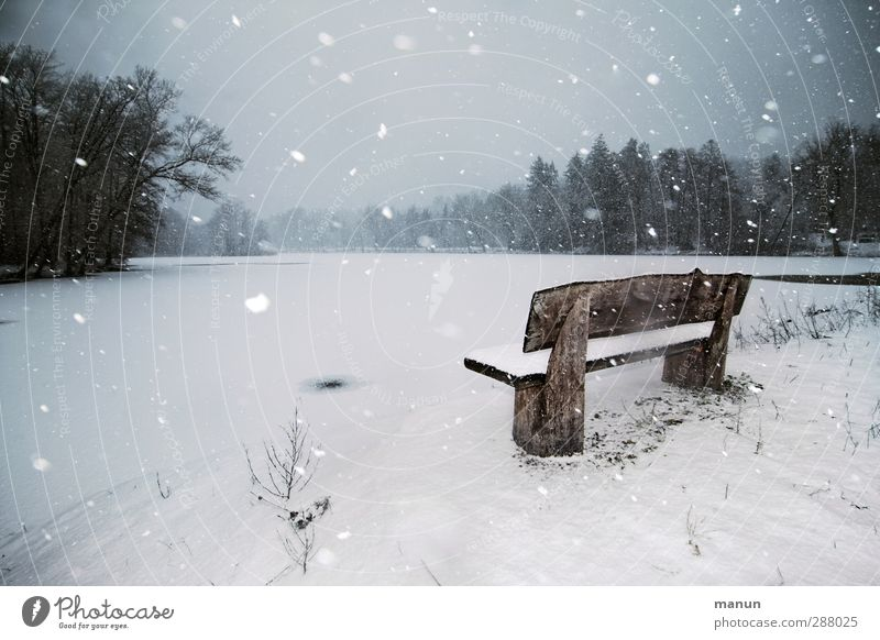 blow snow Winter vacation Nature Landscape Climate Weather Bad weather Wind Ice Frost Snow Snowfall Forest Lakeside Bench Freeze Cold Natural Calm Loneliness