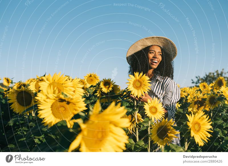 Happy young black woman in a sunflower field Woman Sunflower Field Ethnic Black Curly African mixed-race Cute Youth (Young adults) Smiling sunflowers