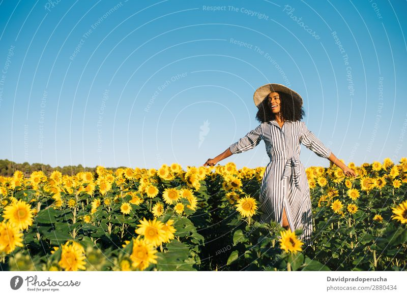 Happy young black woman walking in a sunflower field Woman sunflowers Yellow Ethnic Beautiful Cute Summer Meadow Sky African Plantation Floral Agriculture