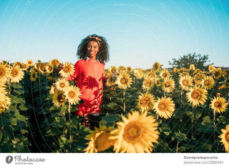 Happy young black woman walking in a sunflower field Agriculture Yellow Cute Summer Meadow African Sky Plantation Floral Bright Youth (Young adults) Ethnic