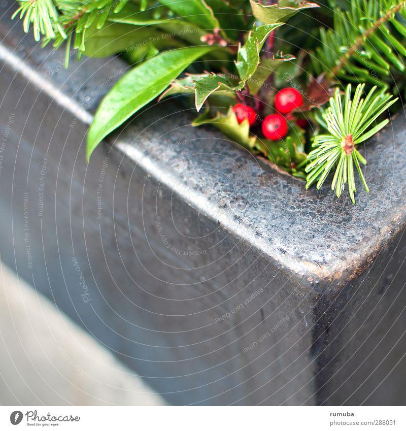Nature Christmas & Advent Green Plant Red Leaf Winter Autumn Gray Garden Terrace Berries Flowerpot Embellish Fir needle Fir branch