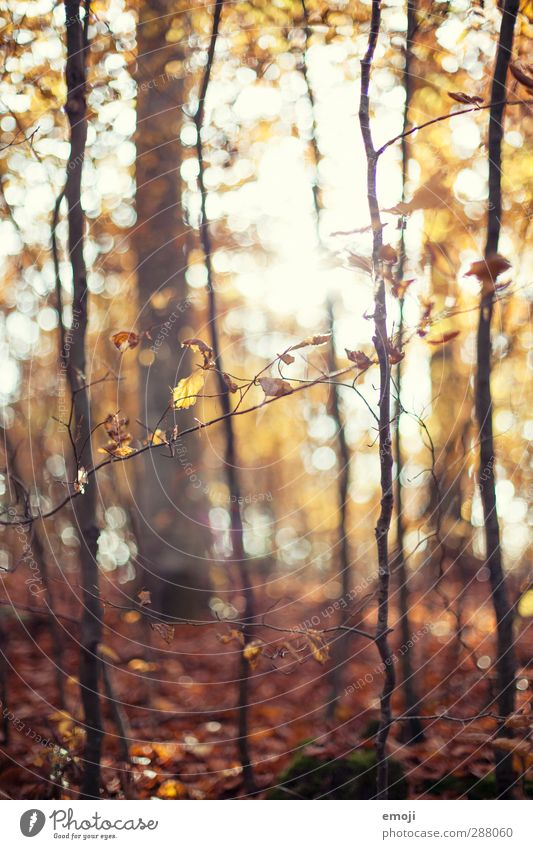 forest Environment Nature Autumn Plant Tree Leaf Forest Natural Brown Deciduous forest Colour photo Exterior shot Day Sunlight Sunbeam Shallow depth of field